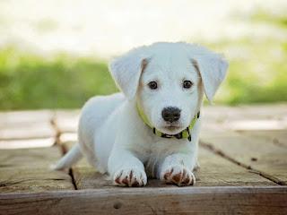 sapne me kala kutta dekhna, dog images