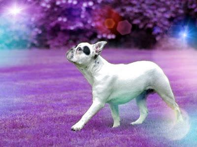 imagenes de cachorros con frases, buenas noches perrito, imagenes de perritos bonitos. imagenes de una perro, imajenes de perros