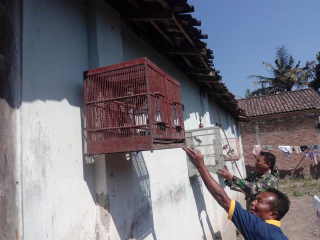 Riyanto Berharap Jalak Suren Harganya Naik Setelah Jalan Di Beton Kodim Klaten