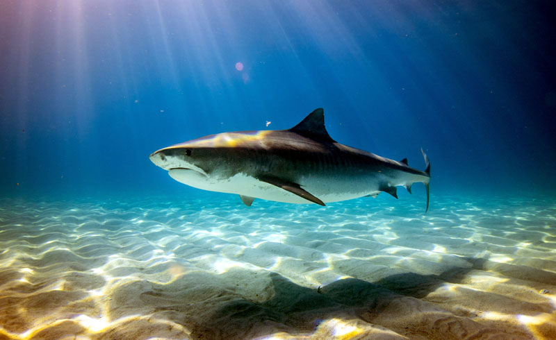 Meet the man who swims with sharks