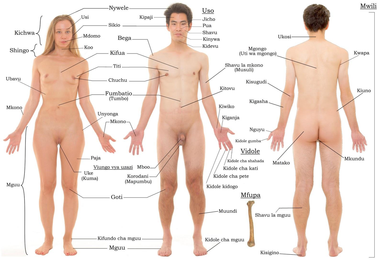 20 Fakta Unik Seputar Tubuh Manusia Yang Jarang Diketahui