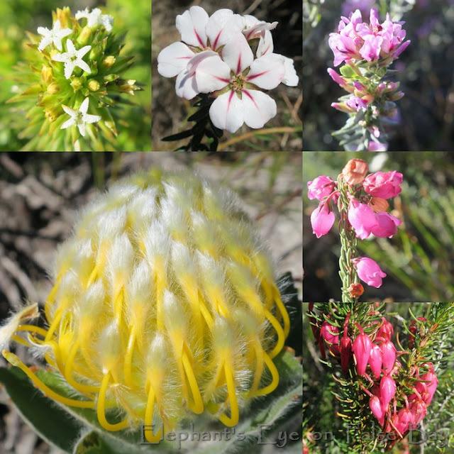 Elsie's Peak flowers in August