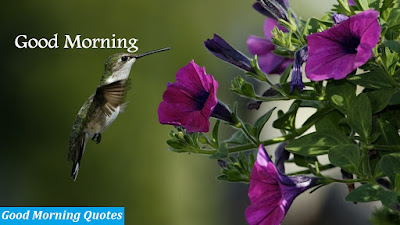 good-morning-wallpapers-good-morning