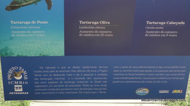 Projeto Tamar Floripa