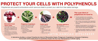 Lindungi-sel-dengan-polifenols