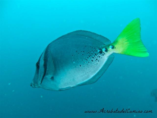 snorkel en isla gorgona