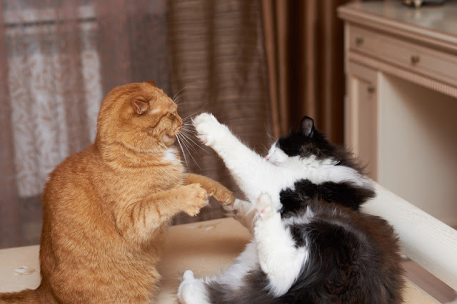 Can Feliway Multicat  help resolve aggression between cats that live together? Promising results from a randomized controlled trial