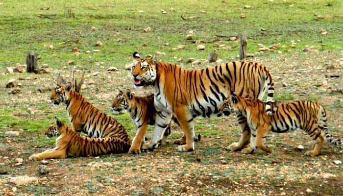 the wildlife, the wildlife india, wildlife,
