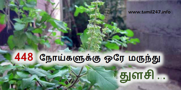 448 noigalai kunamakkum thulasi, cancer cure thulasi, thulasi thanneer, paati vaithiyam, healthy foods in tamil, 448 நோய்களை குணமாக்கும் #துளசி