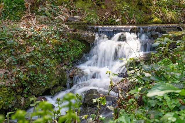 Premiumwanderweg Murgleiter | Etappe 1 von Gaggenau nach Gernsbach | Wandern nördlicher Schwarzwald 27