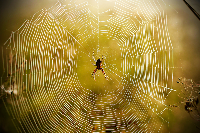 घर में मुसीबत के आने का इशारा करते हैं मकड़ी के जाले, ऐसे समझे!