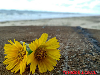 Download Beautiful Yellow Flower Wallpaper