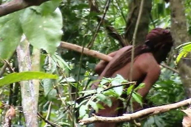 'Tarzã' brasileiro é monitorado há 22 anos na Amazônia pela Funai