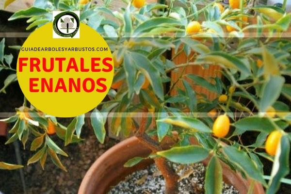 Lista de arboles frutales enanos
