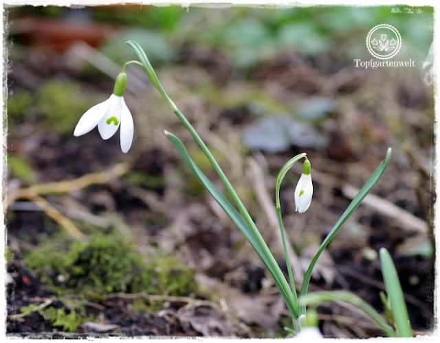 Gartenblog Topfgartenwelt Nachhaltigkeit und Bio im Garten: Meinung einer Gärtnerin