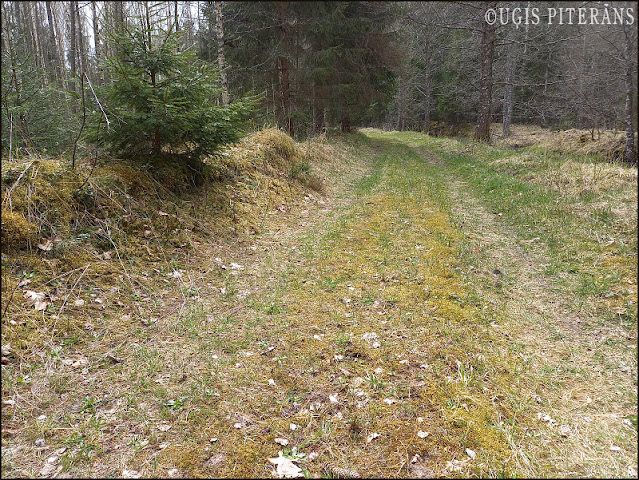 blogs3673_Andrena_cineraria_habitat.jpg