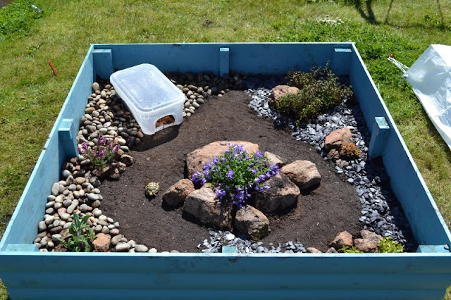Kandang kura-kura darat outdoor