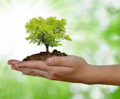 Succeed With World Environment Day In 24 Hours !
