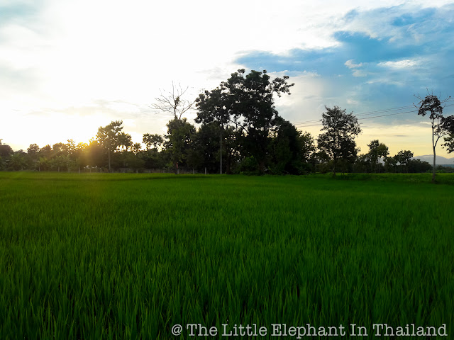 Rice fields in Nan - Thailand