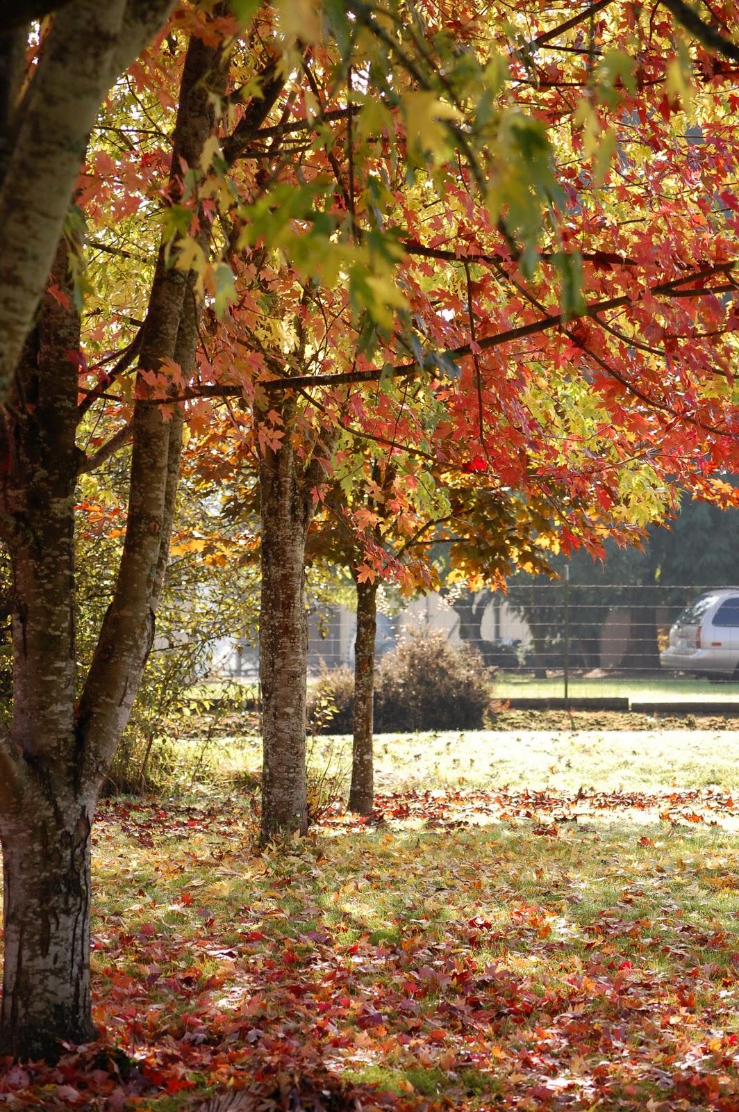 Beautiful Autumn Sunset: Keri On: Beautiful Autumn Day
