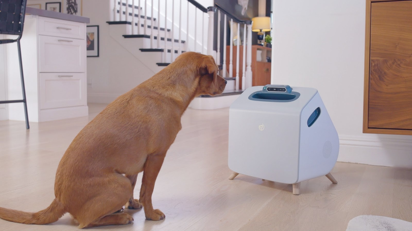Machine learning device to train dogs