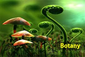 12th Botany Reduced Syllabus all Study Material Collection 2020-2021