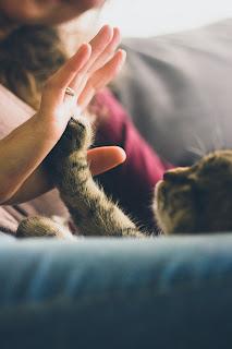 Chat parlant : votre chat vous dira ce qu'il ressent si vous pouvez le comprendre