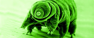 Tardigrades Can Survive X-Ray Bombardment by Deploying a Protein Shield