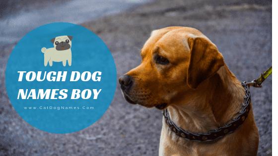 Tough Dog Names Boy, Tough Dog Names
