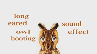 how owl sounds