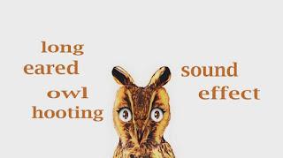 how owl sounds