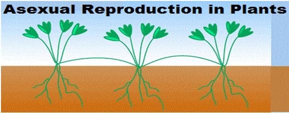 ARP1 - पौधों में अलैंगिक प्रजनन क्या है और यह किन विधियों से होता है