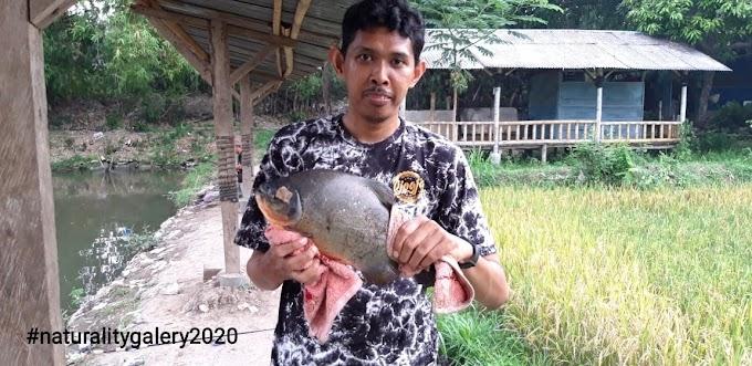 Trip Empang: Kolam Pancing Cak Yani