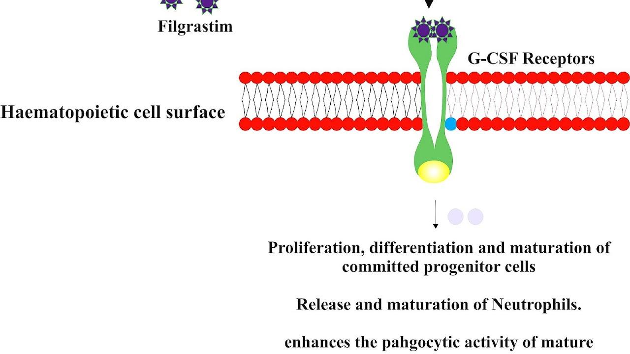 Filgrastim - Filgrastim Side Effects - Effect Choices