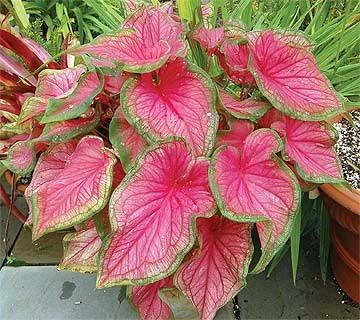 Jue Various Tempahan Benih Semaian Buah Bunga Herba