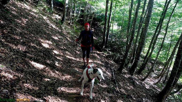 Atravesando el bosque en la ruta a Castro Valnera
