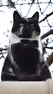 Cat Sitting Fat Mobile HD Wallpaper