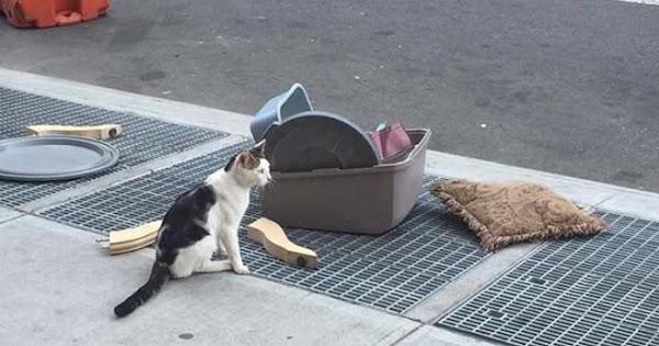 Un gato es abandonado con todas sus pertenencias en la calle