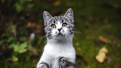 HD Wallpaper Cute kitten, cat, pet, animal