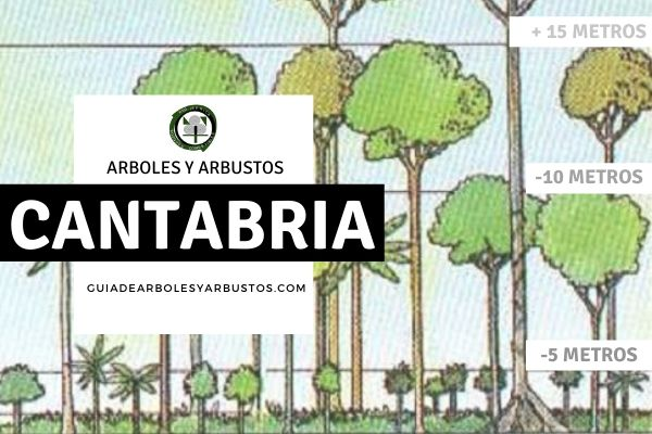 Arboles y arbustos de la provincia de Cantabria, España, por estratos