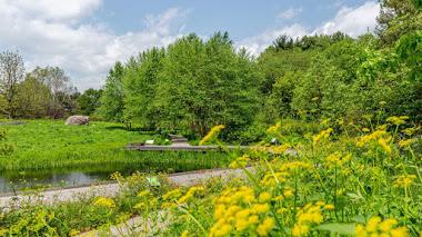 Jardín de Plantas Nativas en el Botánico de Nueva York