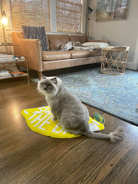 cat on a mat
