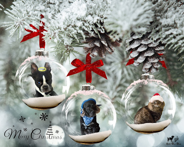 Christmas Card 2019 (©Jenny Bell @ Bell Fur Zoo)