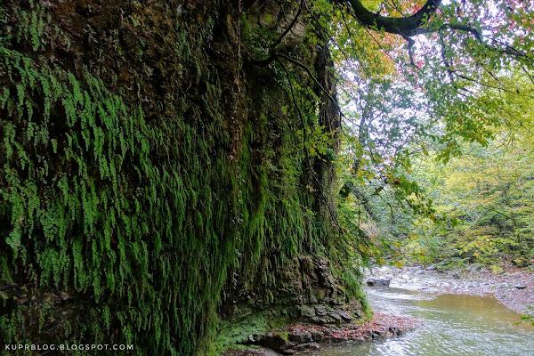Стена каньона с висячими зелёными растениями