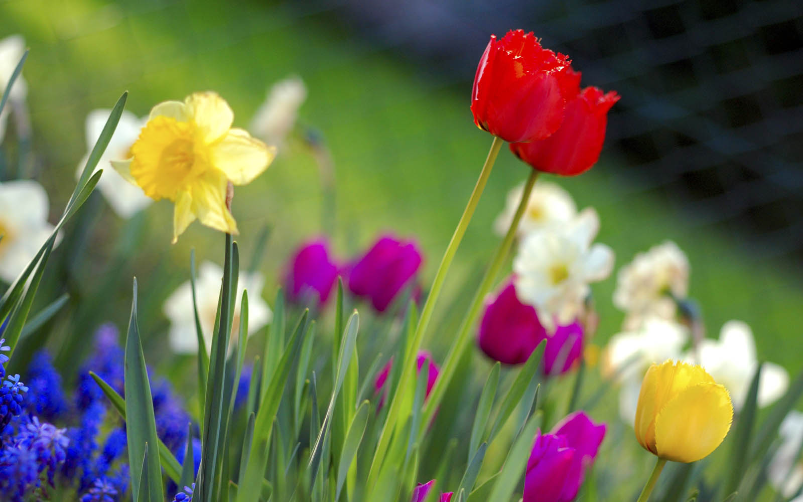 Wallpapers spring flowers wallpapers - Backgrounds springtime ...