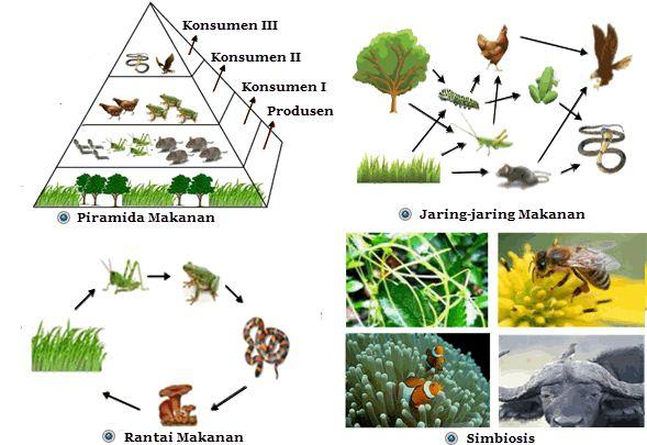 Pola Interaksi Antar Komponen Biotik dalam Ekosistem