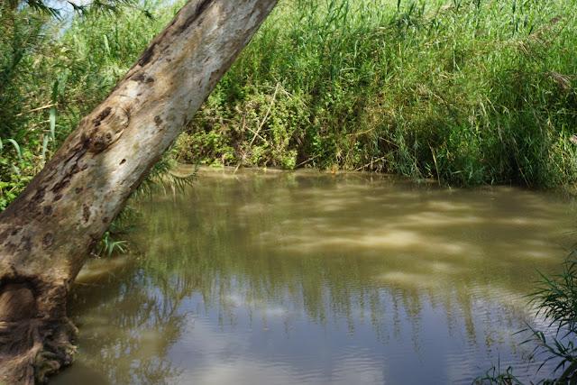 בריכת מים בנחל הירקון