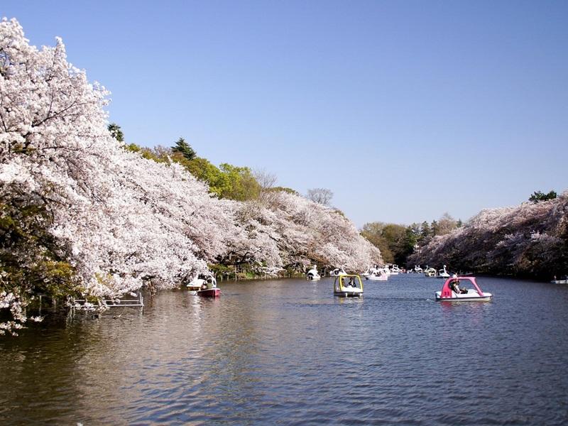 สวนอิโนะคาชิระ (Inokashira Park: 井の頭恩賜公園) @ www.travel.mynavi.jp