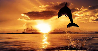 yakni obyek wisata di pesisir Bali Utara Serunya Menyaksikan Lumba-lumba di Pantai Lovina Bali