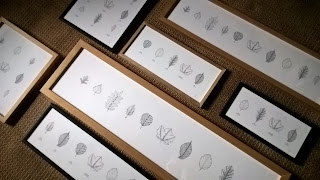 Selection of framed leaf prints - stipple illustrations by Rachel M Scott